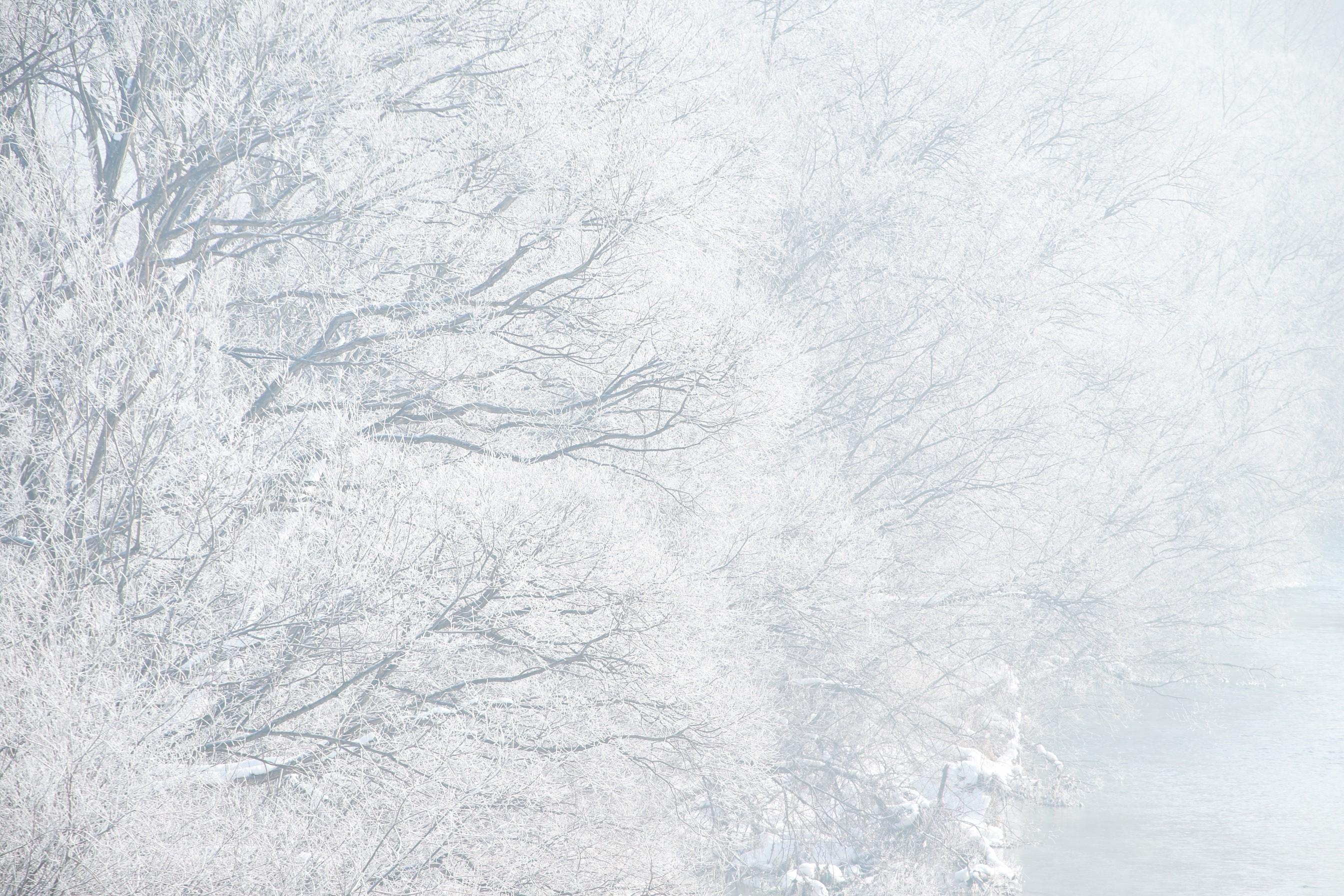 初音ミクが好きだ!【歌ってみた】好き!雪!本気マジック